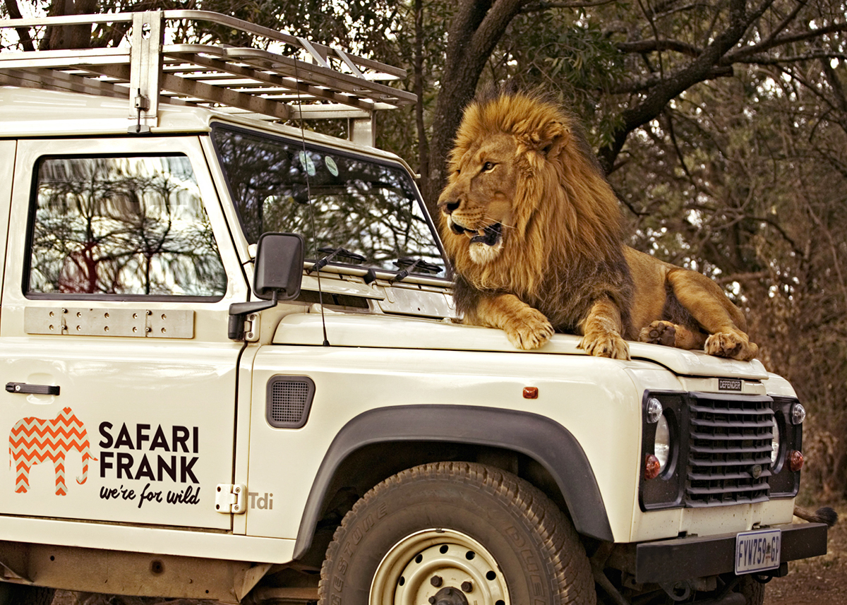 Safari Frank - Branding vehicle livery lion on bonnet for Blog